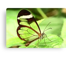 Transparent Butterfly Canvas Print