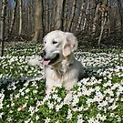 Springtime in the wood by Trine