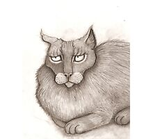 Grey Annoyed Cat Photographic Print