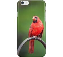 The Pensive Cardinal iPhone Case/Skin