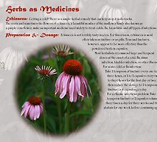 Herbs as Medicine - Echinacea by cdwork