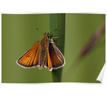 Butterfly Macro. Poster