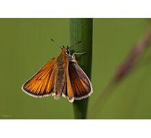 Butterfly Macro. Photographic Print