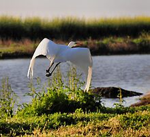 The Flight of the Egret 3 by Lenny La Rue, IPA