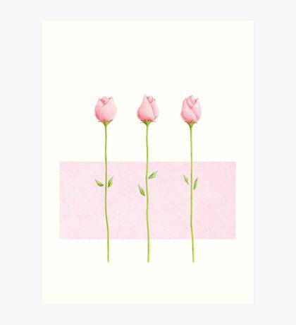 3 Pink Rosebuds Art Print