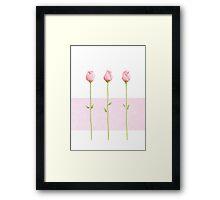 3 Pink Rosebuds Framed Print