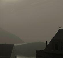 Sun and fog  Monhegan Island Maine by Dave  Higgins