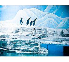 Lonely Penguin Photographic Print