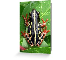 tree frog from Lubumbashi, Greeting Card