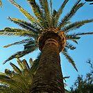 Palm Tree in the Vegas Sky  {short girls prostective} by Diane Trummer Sullivan