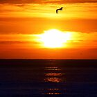 Sunset and Seagulls by Polly Peacock