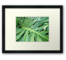 Huge Leaf Framed Print