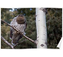 Great Horned Owl Blur Poster