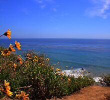 Spring at La Piedra State Beach by Jo Nijenhuis