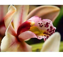 orchid bokeh Photographic Print