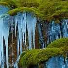 Nature's Best Images by dmvphotos