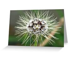 Weeds Have Such Beauty Greeting Card