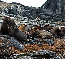 Seals by Evita