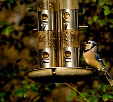 Feeding Time by dmvphotos