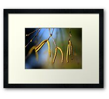 Male River Birch Catkins Framed Print