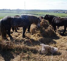 Hay There! by Francis Drake