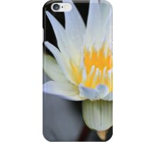 White Water Lily Aglow iPhone Case/Skin