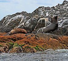 Seals II by Evita