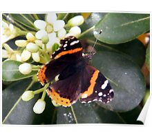 Butterfly And Flowers Poster
