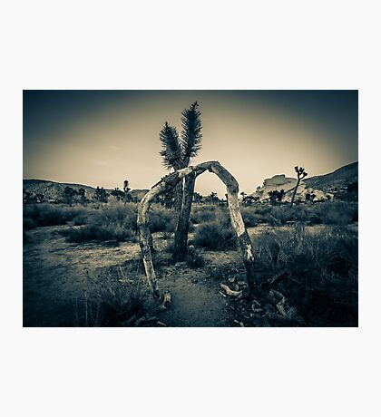On Bended Knee Photographic Print
