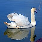 Mirror Image .......... by lynn carter