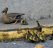 Momma duck & babies by Ladona
