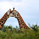 HUGS - THE GIRAFFE - kameelperd by Magaret Meintjes