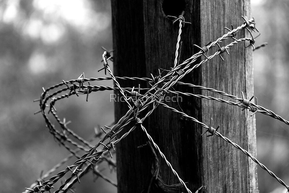 Barbed Wire by Richard Keech
