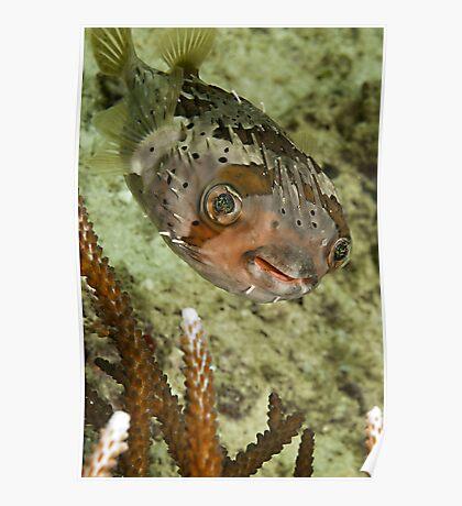 Porcupine Fish Poster