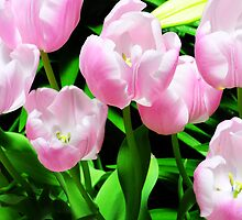 Dance Of The Pink Tulips by Kathleen Struckle