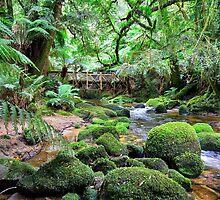 St. Columba Falls Reserve Creek by TedmBinegas
