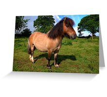 'Bertie' the pony Greeting Card