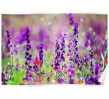Purple Echium vulgare (Viper's Bugloss or Blueweed) Photographed in Armenia  Poster
