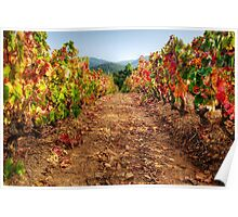 Colorful vineyard Poster