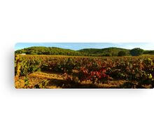 Provence vineyard in autumn Canvas Print