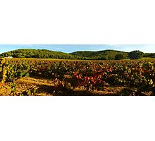 Provence vineyard in autumn Photographic Print