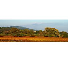 Autumn in Provence vineyard Photographic Print