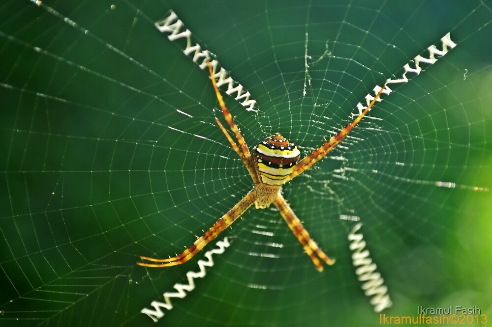 Spider by Ikramul Fasih