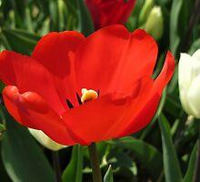 Beautiful Red by ienemien