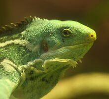 Fijian Iguana by Steve Bullock