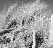 The Dunes - black and white by Pamela Jayne Smith