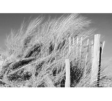 The Dunes - black and white Photographic Print