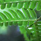 fractal pattern in a fern by lensbaby