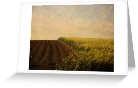 Green Grass. by Antonio Arcos aka fotonstudio