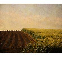 Green Grass. Photographic Print